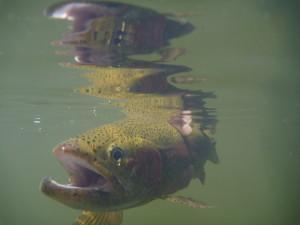 Burns Lake 2010 006