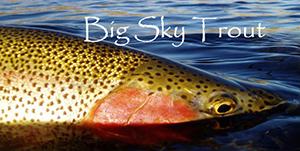 Big Sky Trout